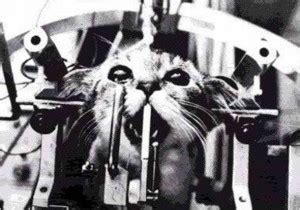 The Truth about Cats and Dogs and Vivisection | Filipino