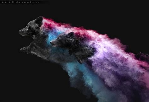Photos of Dogs Jumping with Colorful Powder Trails