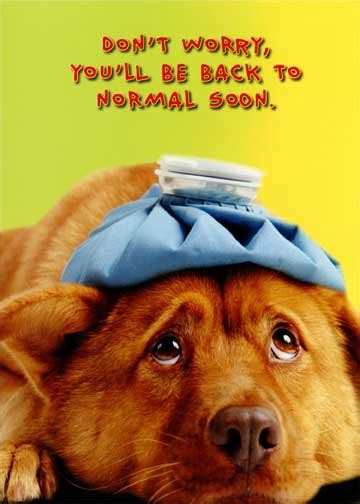 Dog Back to Normal Funny / Humorous Get Well Card by